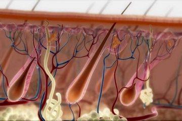טיפול חדיש בהתקרחות ונשירת שיער
